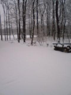一夜明けたら雪景色になった